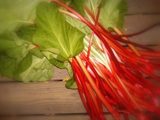 Rhubarb may 09